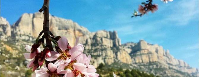 Spring is coming to Montserrat! This photo is one of our 10 winners of #bgbphototour, by @joket46
