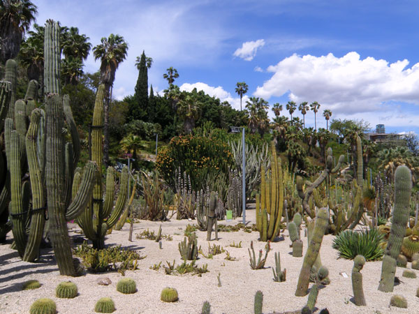 More than 800 varieties of cactus wait for you in Montjuic