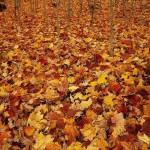 Autumn in Barcelona