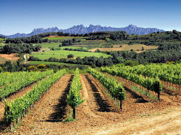 Views from Penedes wine region - vineyards and Montserrat