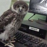 Webcams owl