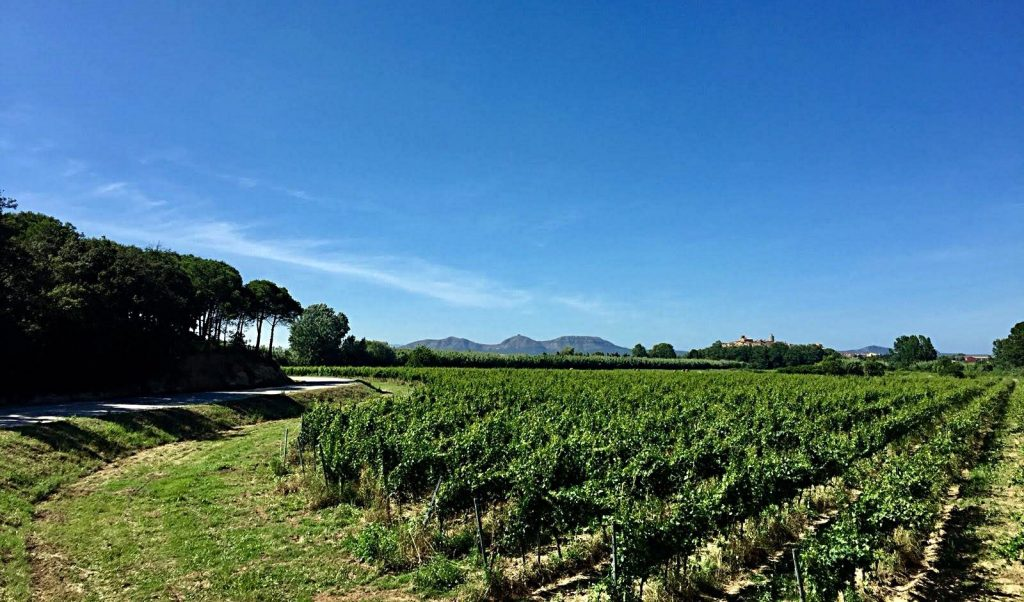 Vineyards in the Baix Empordà, with the Montgrí Mountains behing.Photograph by Isaac Peral