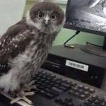 Webcams owl